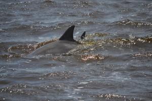 Dolphin Tour Jekyll Island